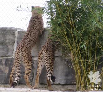 zoo toni