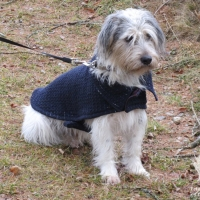 Hundemantel Burdastyle 12/2017 133