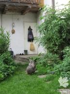 Im Hof mit Hühnern