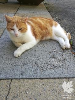 Nähcamp Schweiz Katze