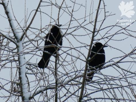 Rabenkrähen am Aussichtsplatz im Winter
