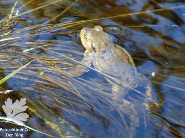 Erdkrötenmann