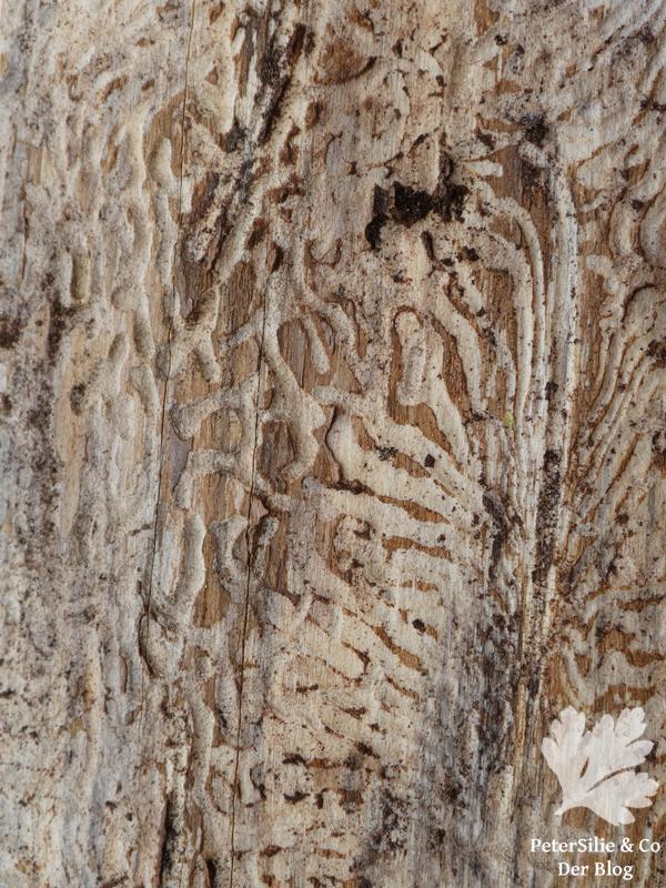 Bohrgänge im Baum