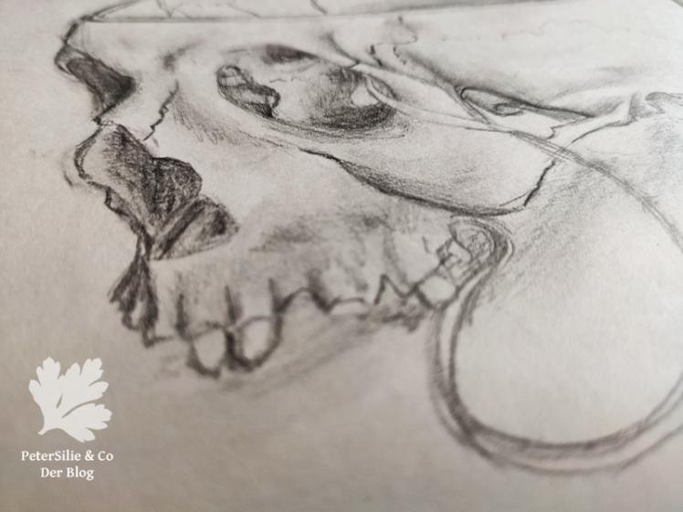 Anatomie Schädel Seite