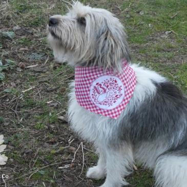 Hundehalstuch Wäschekaro Stickerei